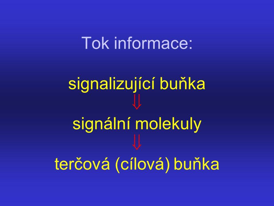 Tok informace: signalizující buňka  signální molekuly  terčová (cílová) buňka