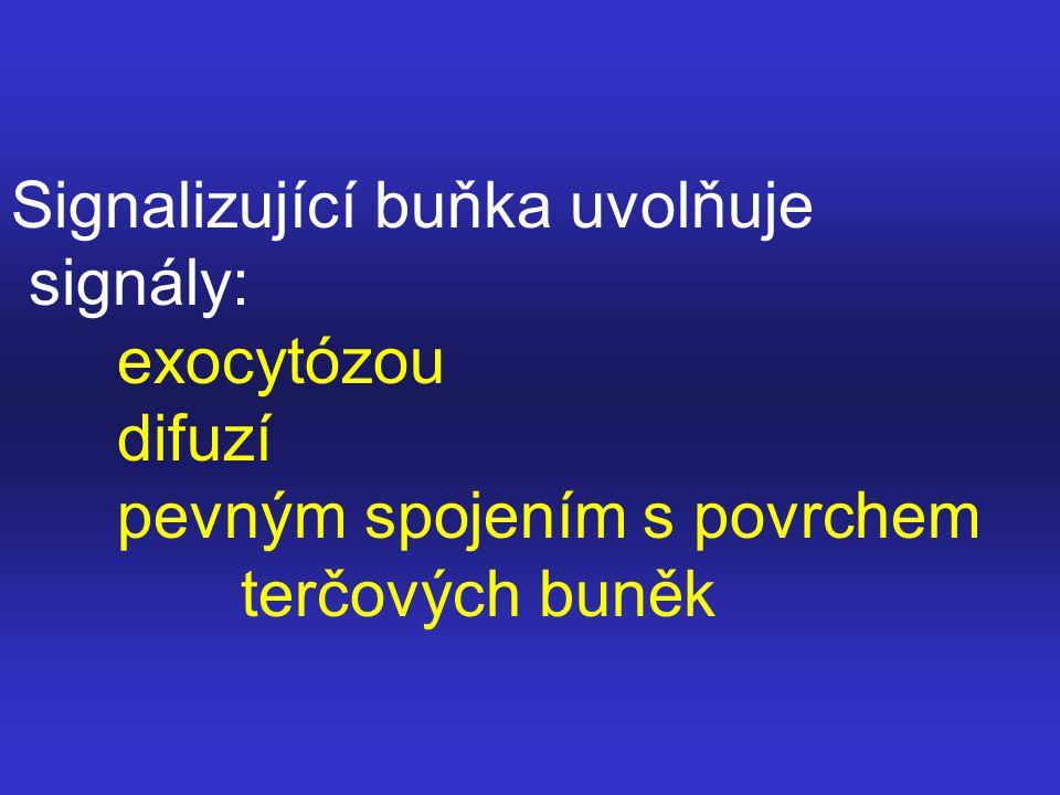 Typy signalizací: parakrinní synaptické endokrinní přímý kontakt