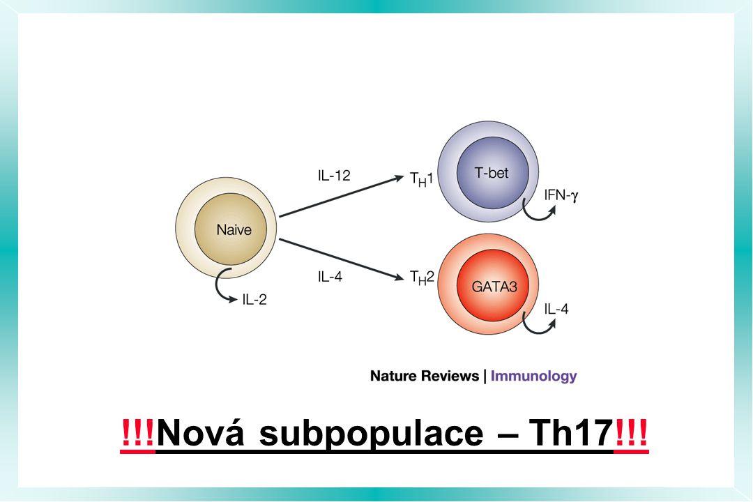 !!!Nová subpopulace – Th17!!!