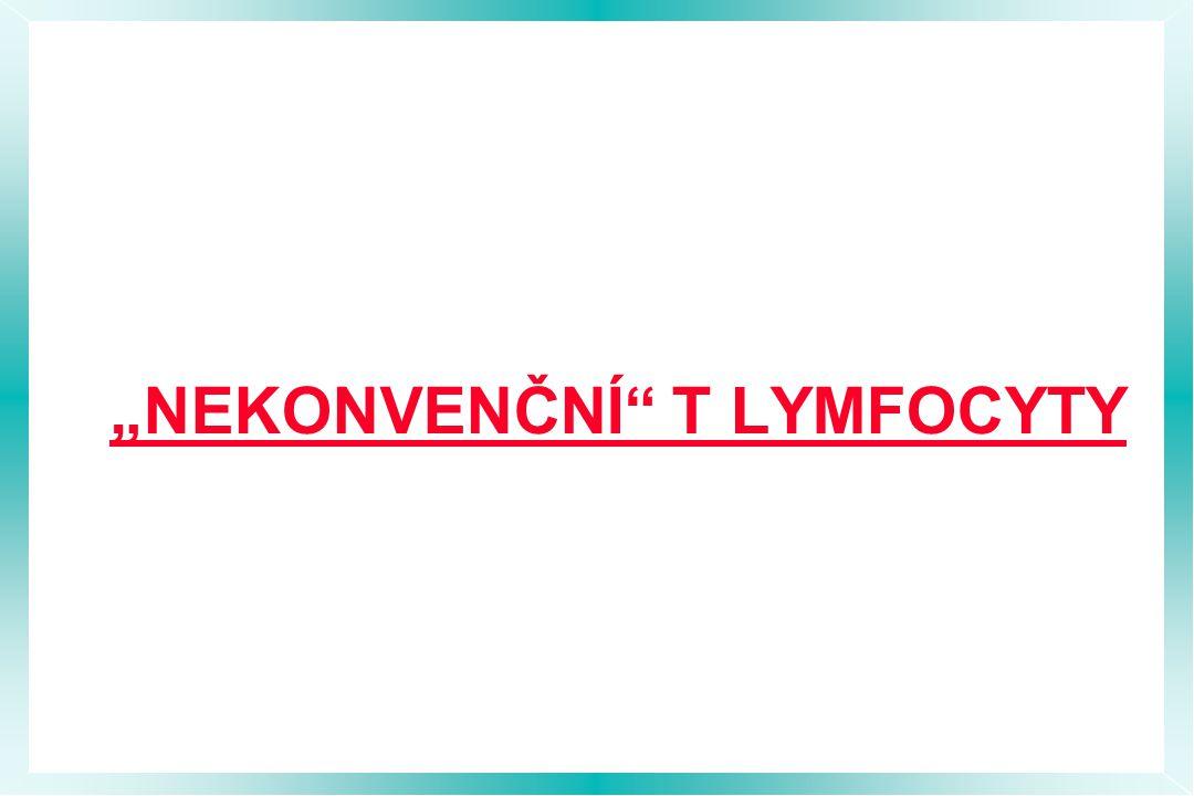 """""""NEKONVENČNÍ"""" T LYMFOCYTY"""