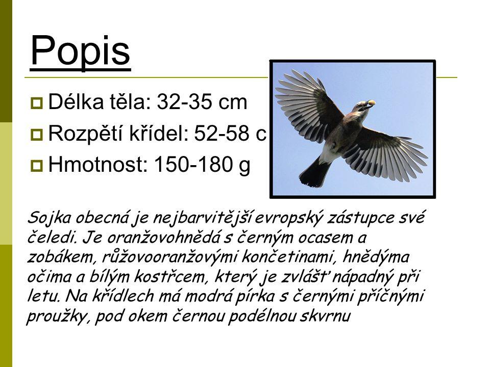 Popis  Délka těla: 32-35 cm  Rozpětí křídel: 52-58 cm  Hmotnost: 150-180 g Sojka obecná je nejbarvitější evropský zástupce své čeledi.
