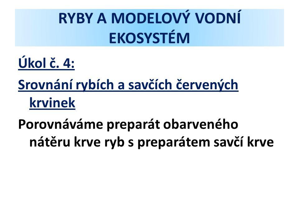 RYBY A MODELOVÝ VODNÍ EKOSYSTÉM Úkol č. 4: Srovnání rybích a savčích červených krvinek Porovnáváme preparát obarveného nátěru krve ryb s preparátem sa