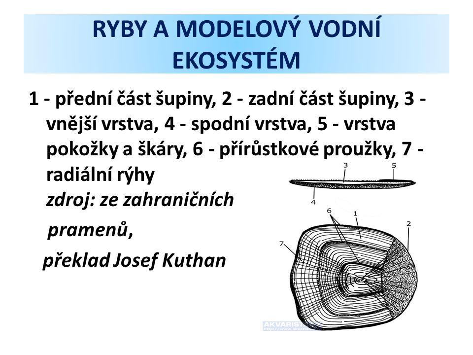 RYBY A MODELOVÝ VODNÍ EKOSYSTÉM 1 - přední část šupiny, 2 - zadní část šupiny, 3 - vnější vrstva, 4 - spodní vrstva, 5 - vrstva pokožky a škáry, 6 - přírůstkové proužky, 7 - radiální rýhy zdroj: ze zahraničních pramenů, překlad Josef Kuthan