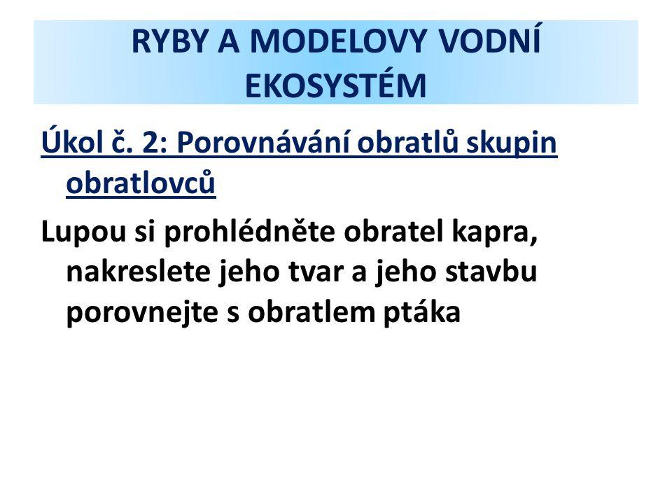RYBY A MODELOVY VODNÍ EKOSYSTÉM Úkol č.