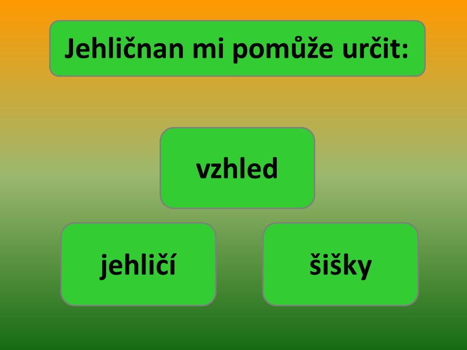 vysoký strom s prořídlou korunou a nápadně převislými větvemi nízký štíhlý keř s kuželovitou korunou nízký do šířky se rozrůstající strom nebo keř široká nepravidelná koruna, křivé větve statná koruna ve tvaru pyramidy, vrchol válcovitý statná štíhlá koruna ve tvaru kužele, špičatý vrchol