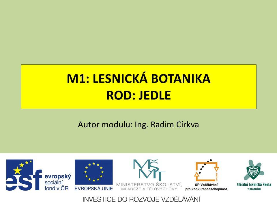 JEDLE OBROVSKÁ ABIES GRANDIS Čeleď: borovicovité
