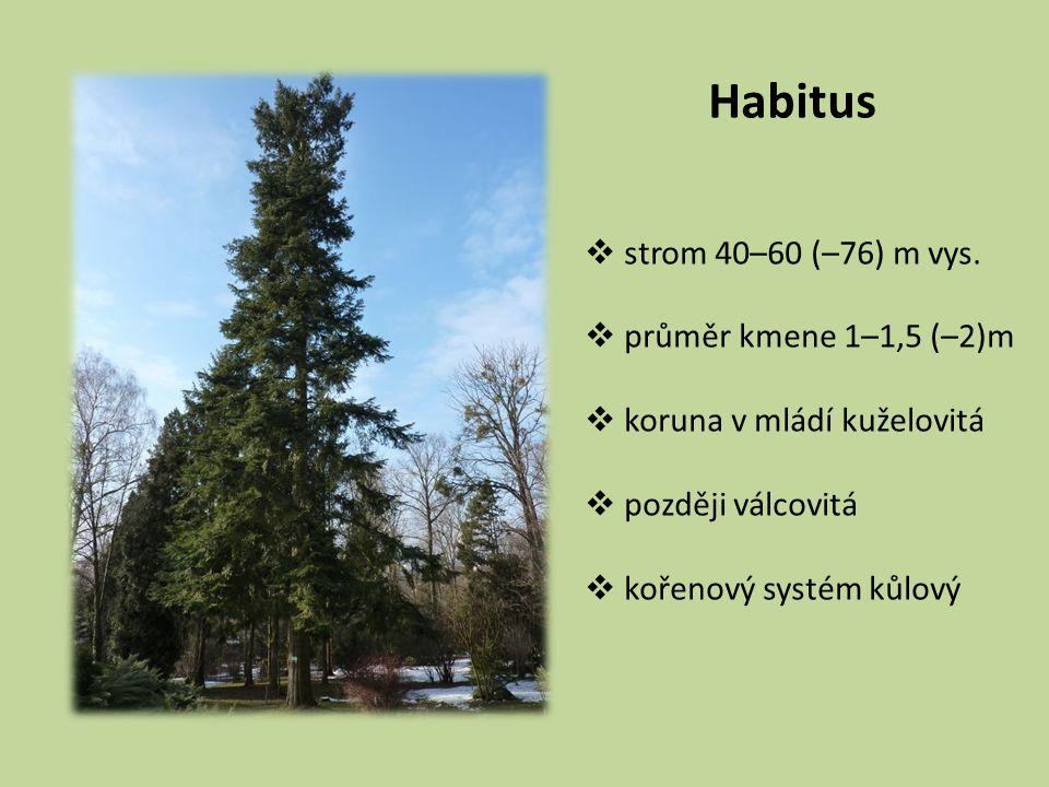 Habitus  strom 40–60 (–76) m vys.  průměr kmene 1–1,5 (–2)m  koruna v mládí kuželovitá  později válcovitá  kořenový systém kůlový