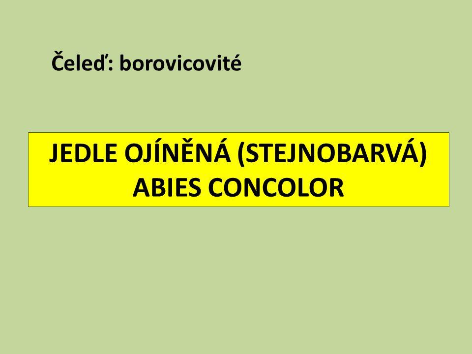 JEDLE OJÍNĚNÁ (STEJNOBARVÁ) ABIES CONCOLOR Čeleď: borovicovité