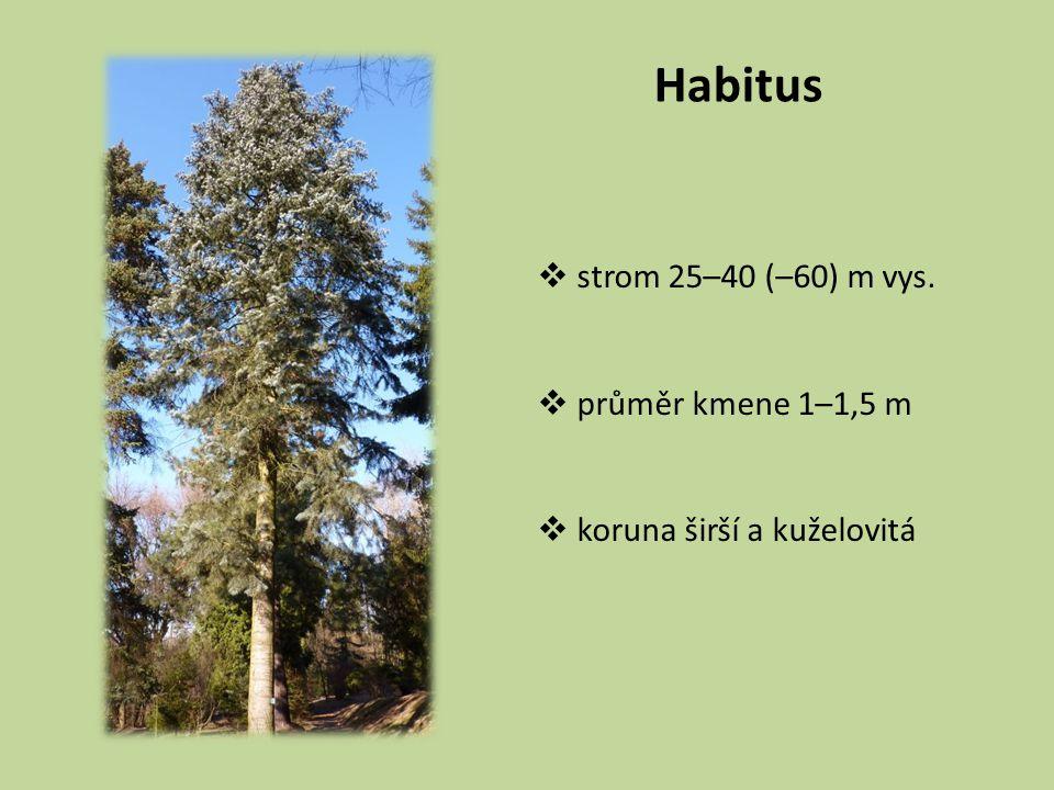 Habitus  strom 25–40 (–60) m vys.  průměr kmene 1–1,5 m  koruna širší a kuželovitá