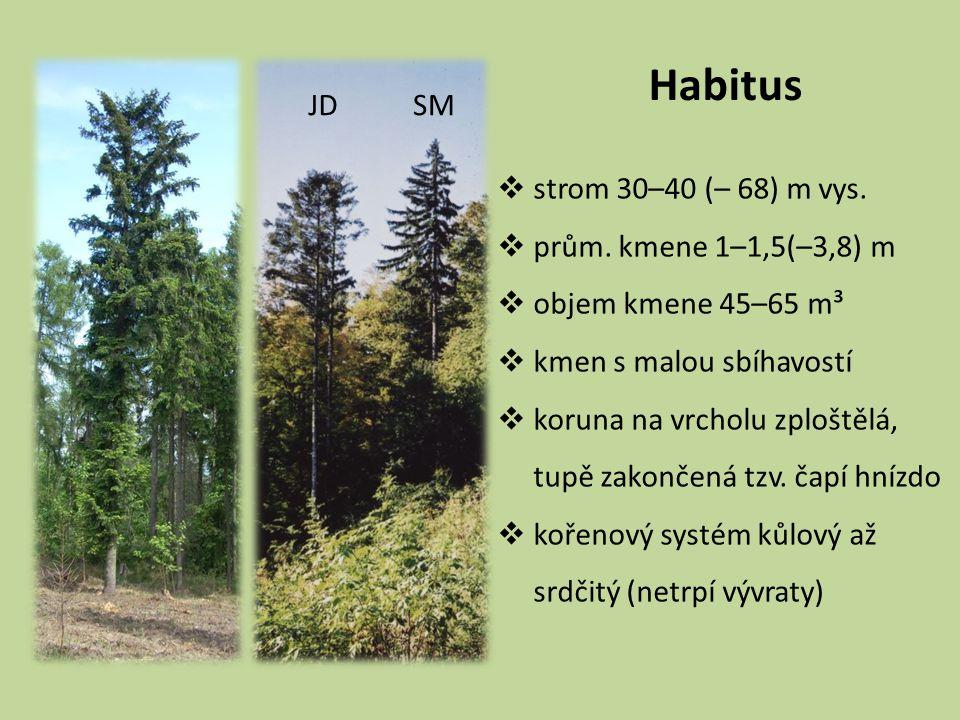 Habitus  strom 30–40 (– 68) m vys.  prům. kmene 1–1,5(–3,8) m  objem kmene 45–65 m³  kmen s malou sbíhavostí  koruna na vrcholu zploštělá, tupě z