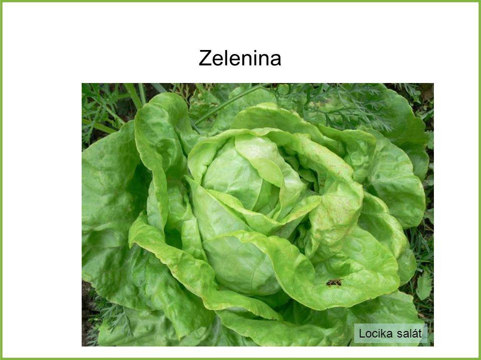 Zelenina Locika salát