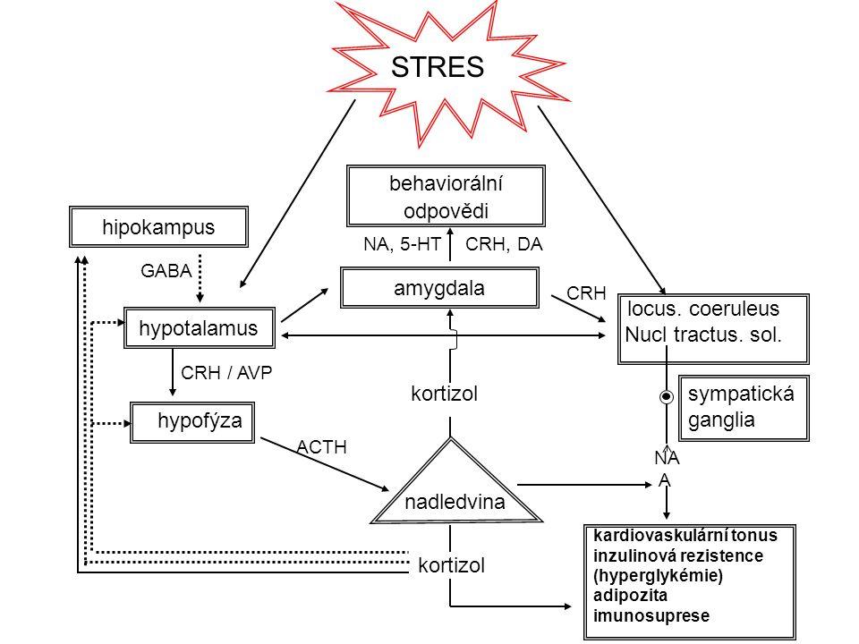 behaviorální odpovědi STRES hypotalamus locus. coeruleus Nucl tractus. sol. amygdala hipokampus hypofýza nadledvina CRH, DANA, 5-HT GABA CRH / AVP ACT