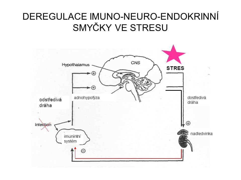 DEREGULACE IMUNO-NEURO-ENDOKRINNÍ SMYČKY VE STRESU zánět dostředivá dráha odstředivá dráha adnohypofýza imunintní systém nadledvinka STRES
