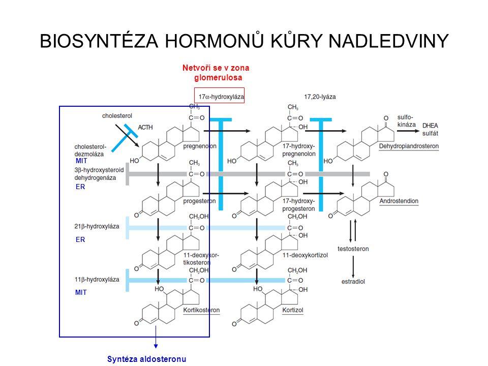 BIOSYNTÉZA HORMONŮ KŮRY NADLEDVINY + Syntéza aldosteronu Netvoří se v zona glomerulosa MIT ER