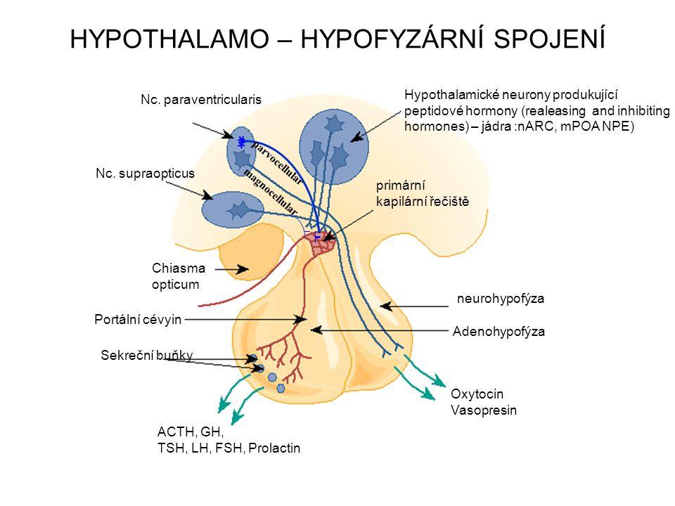 primární kapilární řečiště neurohypofýza Adenohypofýza Oxytocin Vasopresin ACTH, GH, TSH, LH, FSH, Prolactin Sekreční buňky Chiasma opticum Nc. suprao