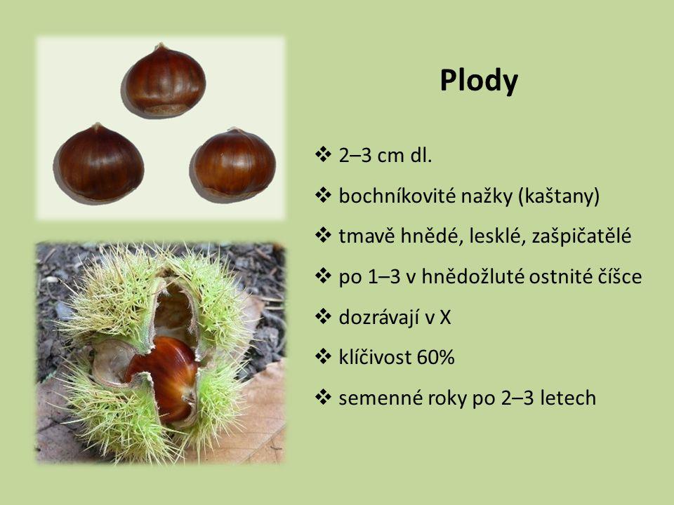 Plody  2–3 cm dl.  bochníkovité nažky (kaštany)  tmavě hnědé, lesklé, zašpičatělé  po 1–3 v hnědožluté ostnité číšce  dozrávají v X  klíčivost 6
