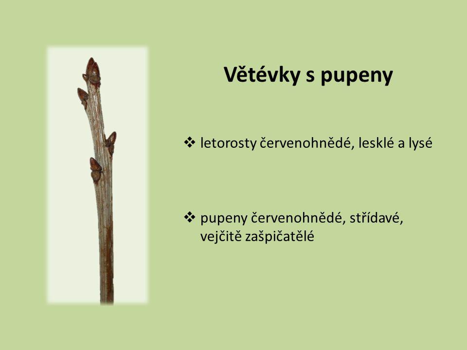 Listy  12–22 cm dl.
