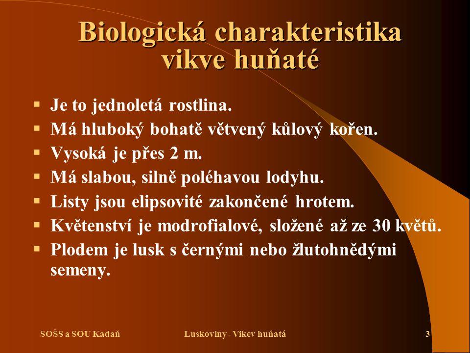 SOŠS a SOU KadaňLuskoviny - Vikev huňatá3 Biologická charakteristika vikve huňaté  Je to jednoletá rostlina.  Má hluboký bohatě větvený kůlový kořen