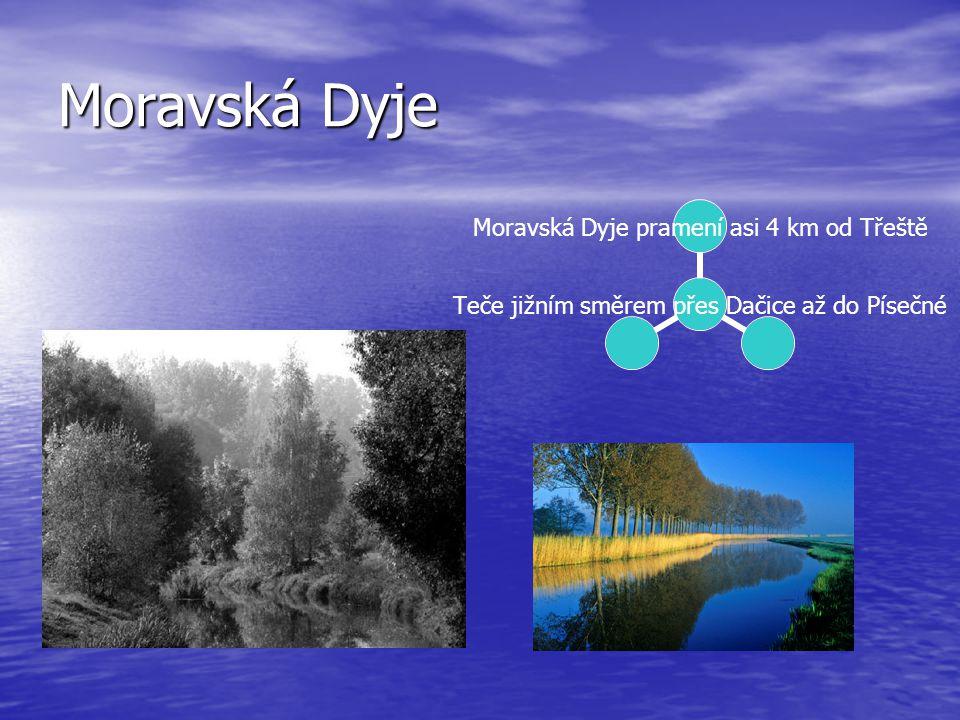 Moravská Dyje Teče jižním směrem přes Dačice až do Písečné Moravská Dyje pramení asi 4 km od Třeště