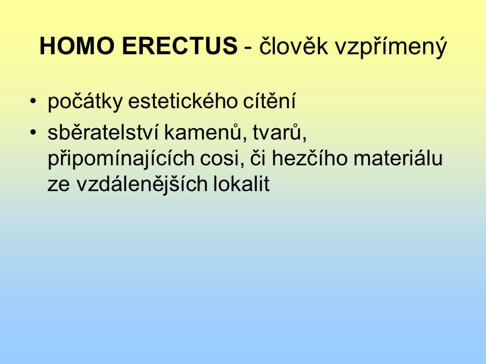 HOMO ERECTUS - člověk vzpřímený počátky estetického cítění sběratelství kamenů, tvarů, připomínajících cosi, či hezčího materiálu ze vzdálenějších lok