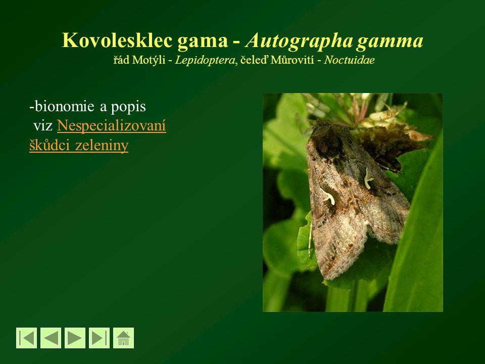 Kovolesklec gama - Autographa gamma řád Motýli - Lepidoptera, čeleď Můrovití - Noctuidae -bionomie a popis viz NespecializovaníNespecializovaní škůdci zeleniny
