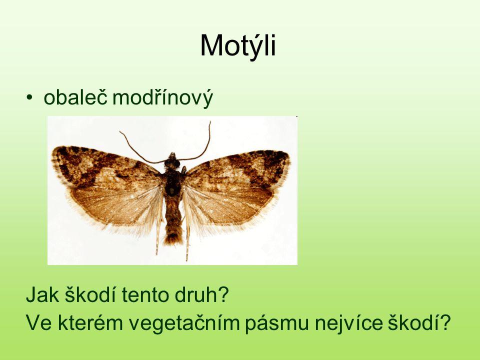 Motýli obaleč modřínový Jak škodí tento druh? Ve kterém vegetačním pásmu nejvíce škodí?