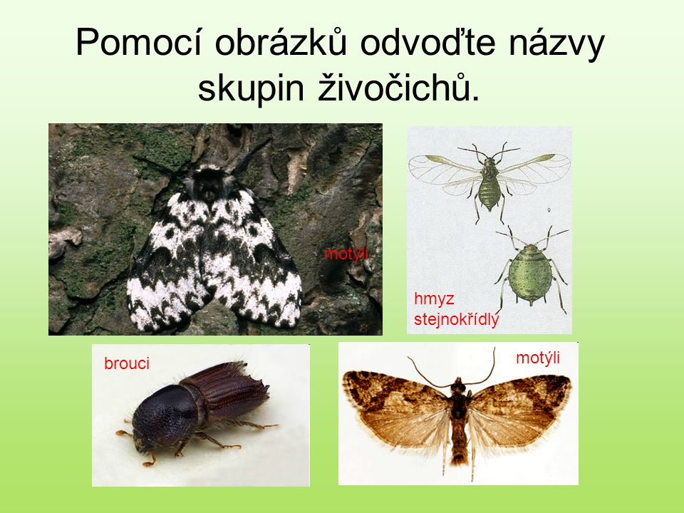 motýli brouci hmyz stejnokřídlý