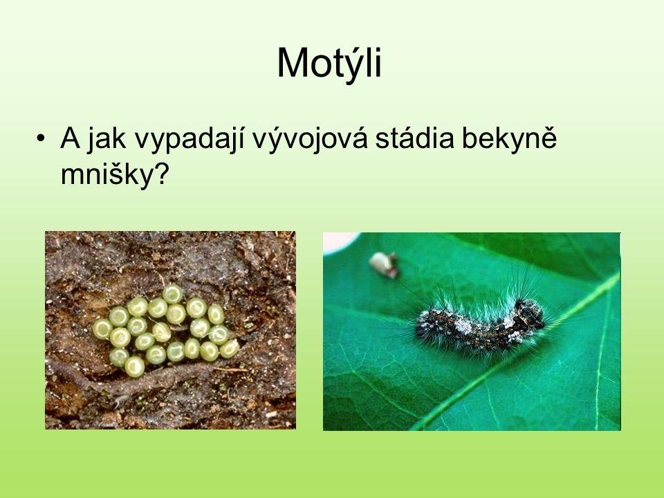 Motýli A jak vypadají vývojová stádia bekyně mnišky?