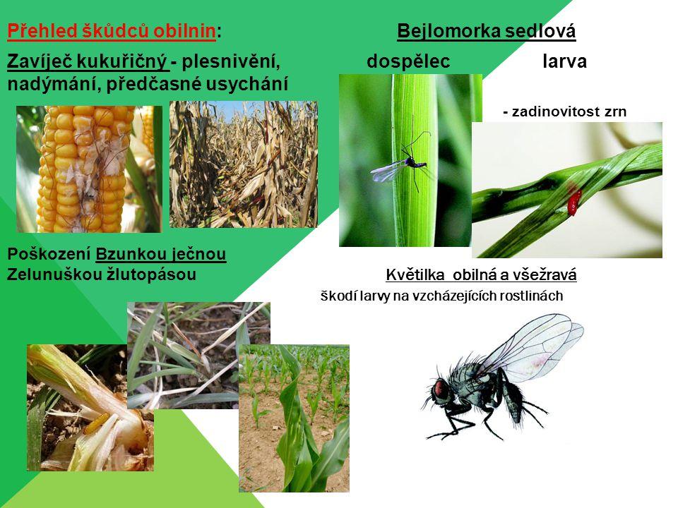Přehled škůdců obilnin: Bejlomorka sedlová Zavíječ kukuřičný - plesnivění, dospělec larva nadýmání, předčasné usychání - zadinovitost zrn Poškození Bz