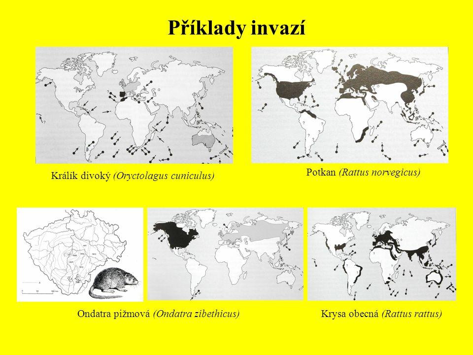 Příklady invazí Ondatra pižmová (Ondatra zibethicus) Králík divoký (Oryctolagus cuniculus) Krysa obecná (Rattus rattus) Potkan (Rattus norvegicus)