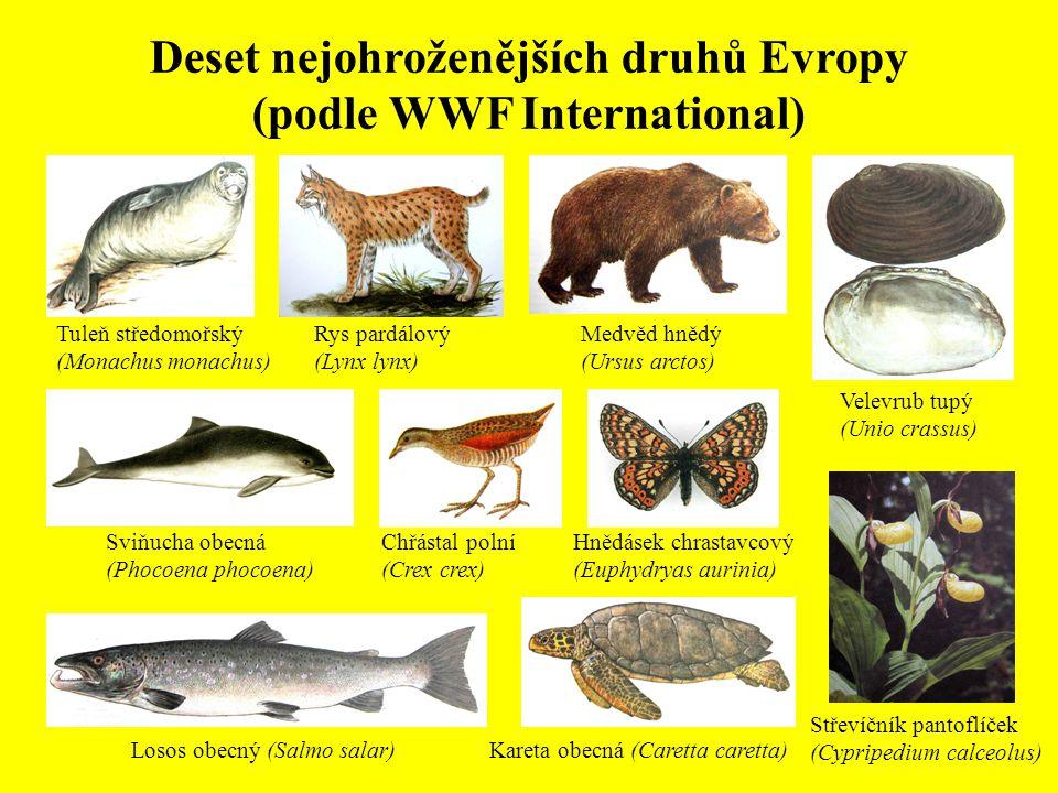 Deset nejohroženějších druhů Evropy (podle WWF International) Tuleň středomořský (Monachus monachus) Rys pardálový (Lynx lynx) Medvěd hnědý (Ursus arc