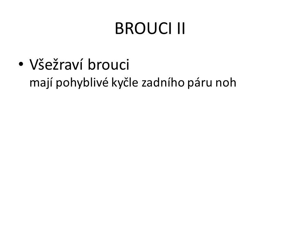 BROUCI II Všežraví brouci mají pohyblivé kyčle zadního páru noh