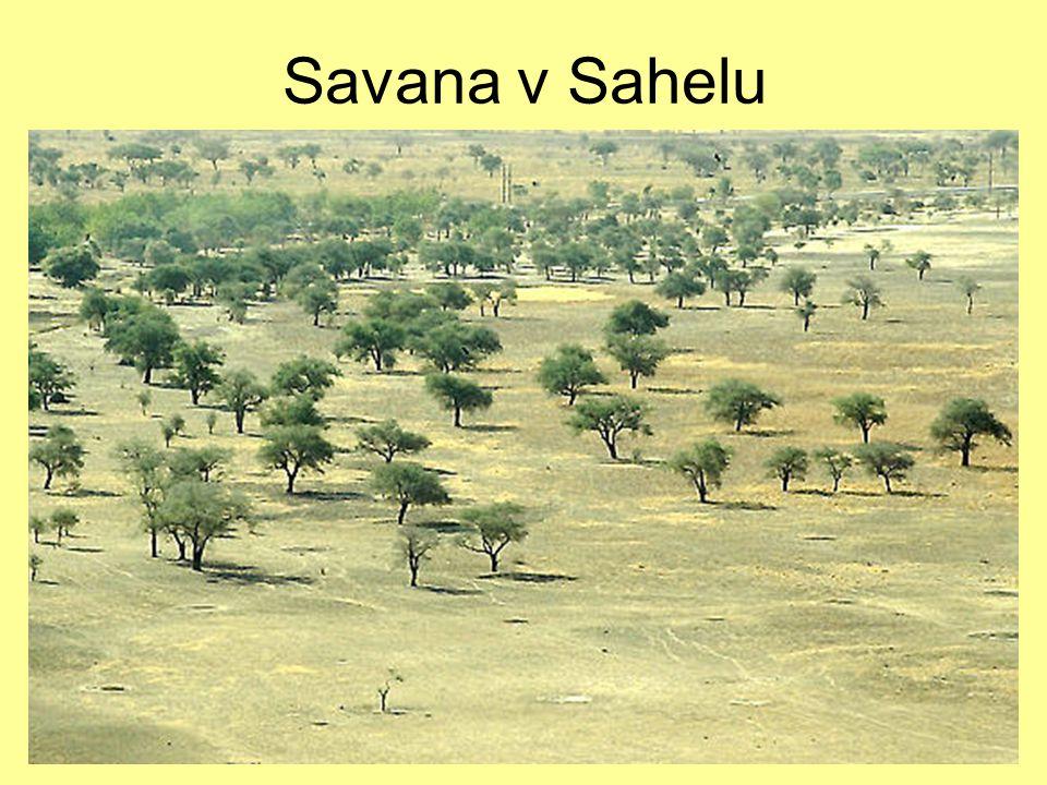 7.12.2004Zdeněk Bergman, G Teplice Savana v Sahelu