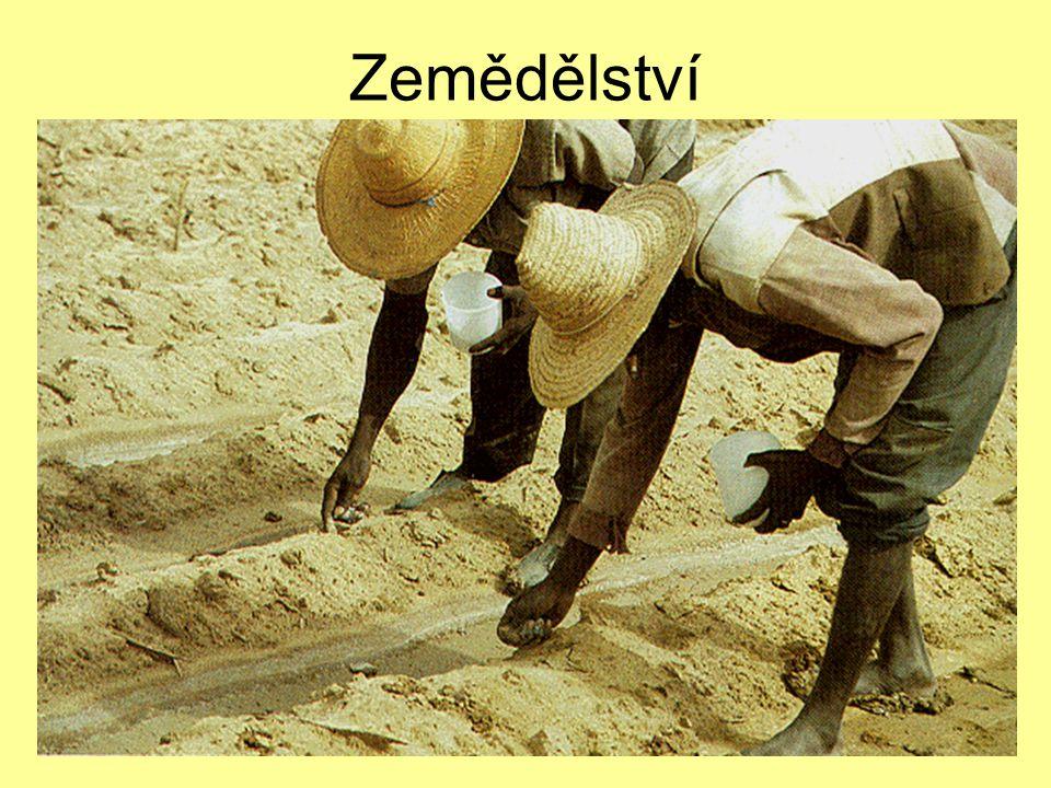 7.12.2004Zdeněk Bergman, G Teplice Extenzivní zemědělství Pastevectví Nomádi Červenozemě Čirok (sorghum), batáty, proso Podzemnice, bavlna (export) škůdci - DDT