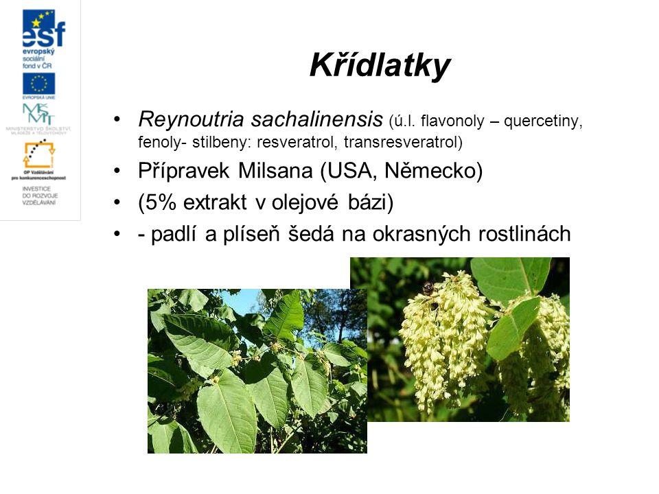 Křídlatky Reynoutria sachalinensis (ú.l. flavonoly – quercetiny, fenoly- stilbeny: resveratrol, transresveratrol) Přípravek Milsana (USA, Německo) (5%