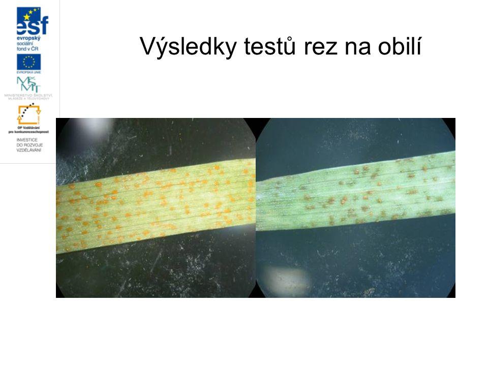 Výsledky testů rez na obilí