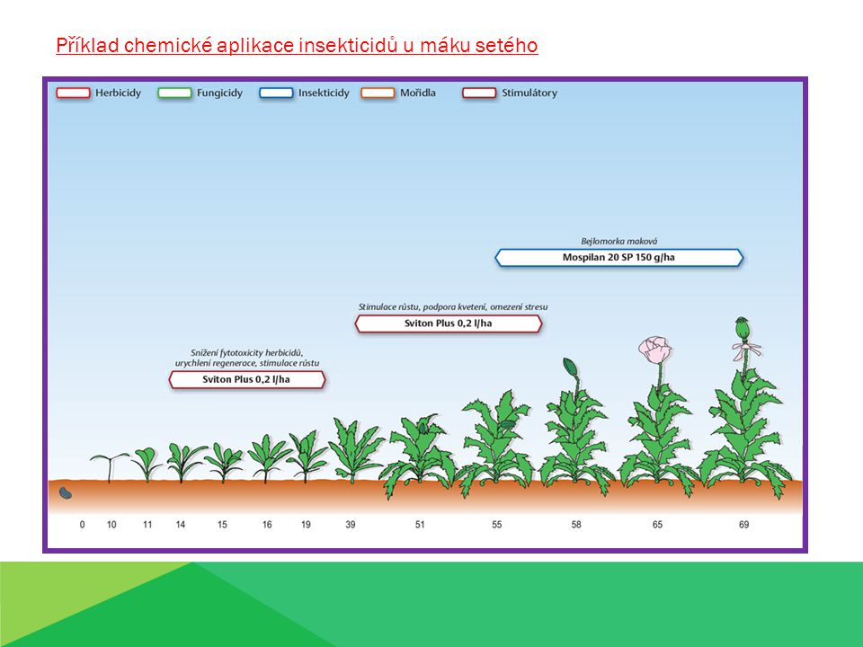 Příklad chemické aplikace insekticidů u máku setého