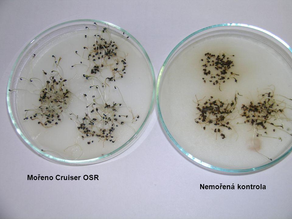 Vliv aplikace fungicidů na výnos semen – registrované