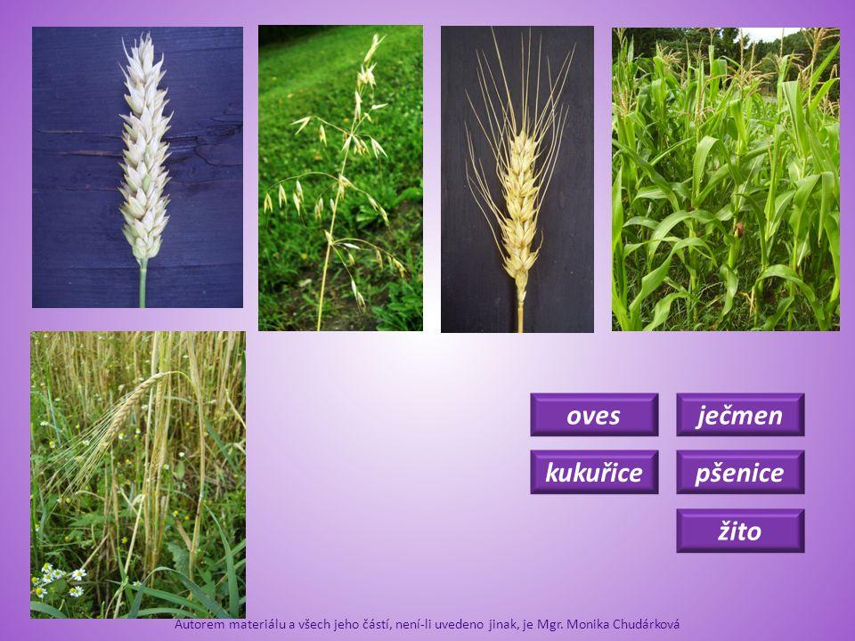 pšenice kukuřice oves žito ječmen Co k čemu patří.