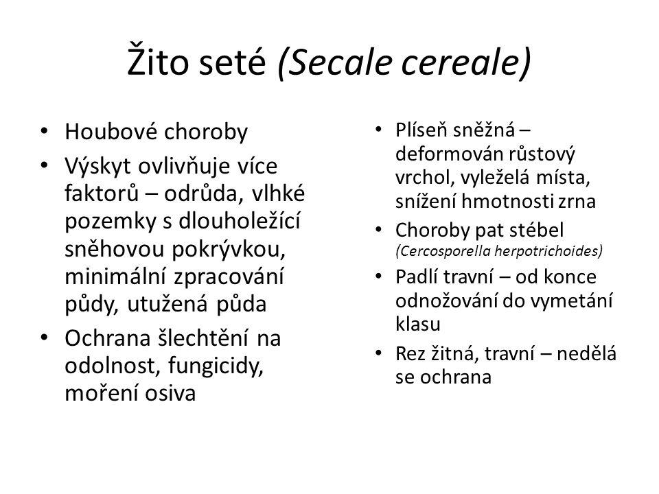 Žito seté (Secale cereale) Plíseň sněžná – deformován růstový vrchol, vyleželá místa, snížení hmotnosti zrna Choroby pat stébel (Cercosporella herpotr