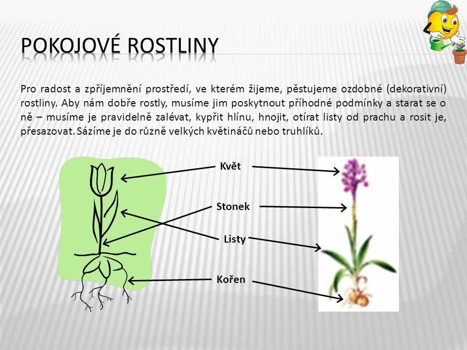 Pro radost a zpříjemnění prostředí, ve kterém žijeme, pěstujeme ozdobné (dekorativní) rostliny. Aby nám dobře rostly, musíme jim poskytnout příhodné p