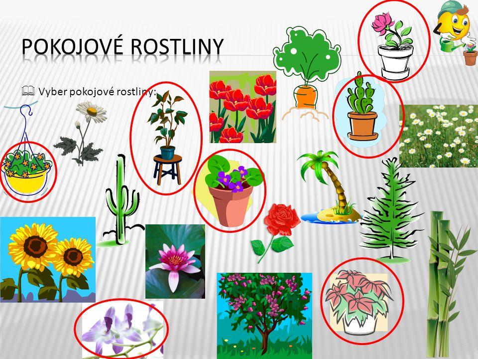  Vyber pokojové rostliny: 6