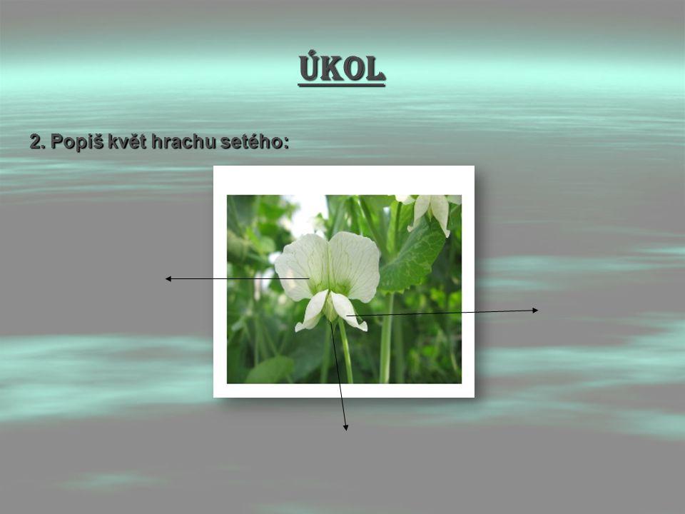 Úkol 2. Popiš květ hrachu setého: