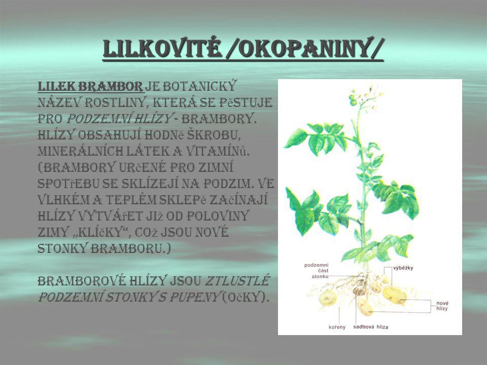 LIlkovitÉ /OKOPANINY/ Lilek brambor je botanický název rostliny, která se p ě stuje pro podzemní hlízy - brambory. Hlízy obsahují hodn ě škrobu, miner