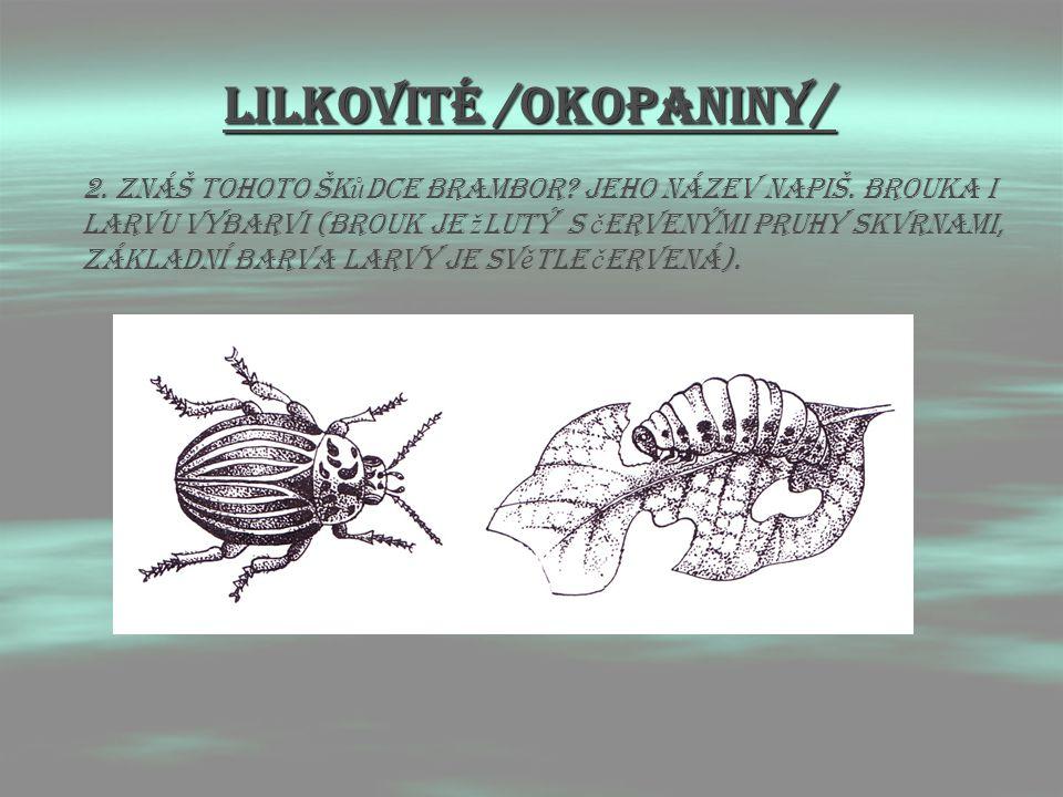 LIlkovitÉ /OKOPANINY/ 2. Znáš tohoto šk ů dce brambor? Jeho název napiš. Brouka i larvu vybarvi (brouk je ž lutý s č ervenými pruhy skvrnami, základní