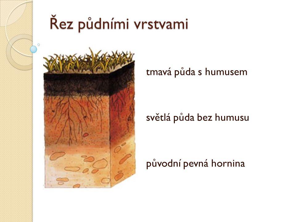 Řez půdními vrstvami tmavá půda s humusem světlá půda bez humusu původní pevná hornina