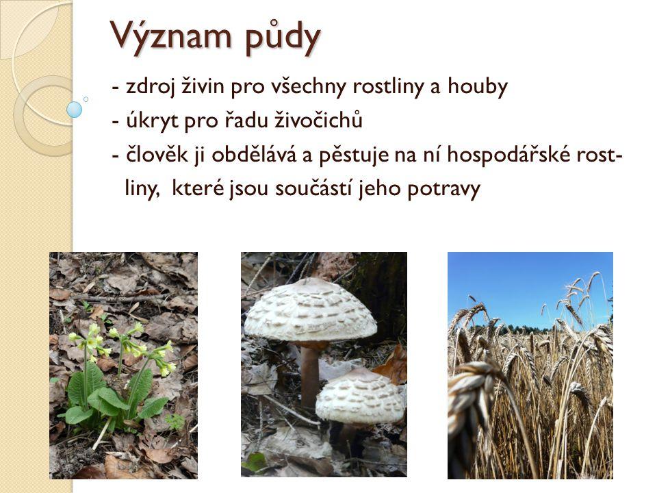 Význam půdy - zdroj živin pro všechny rostliny a houby - úkryt pro řadu živočichů - člověk ji obdělává a pěstuje na ní hospodářské rost- liny, které jsou součástí jeho potravy