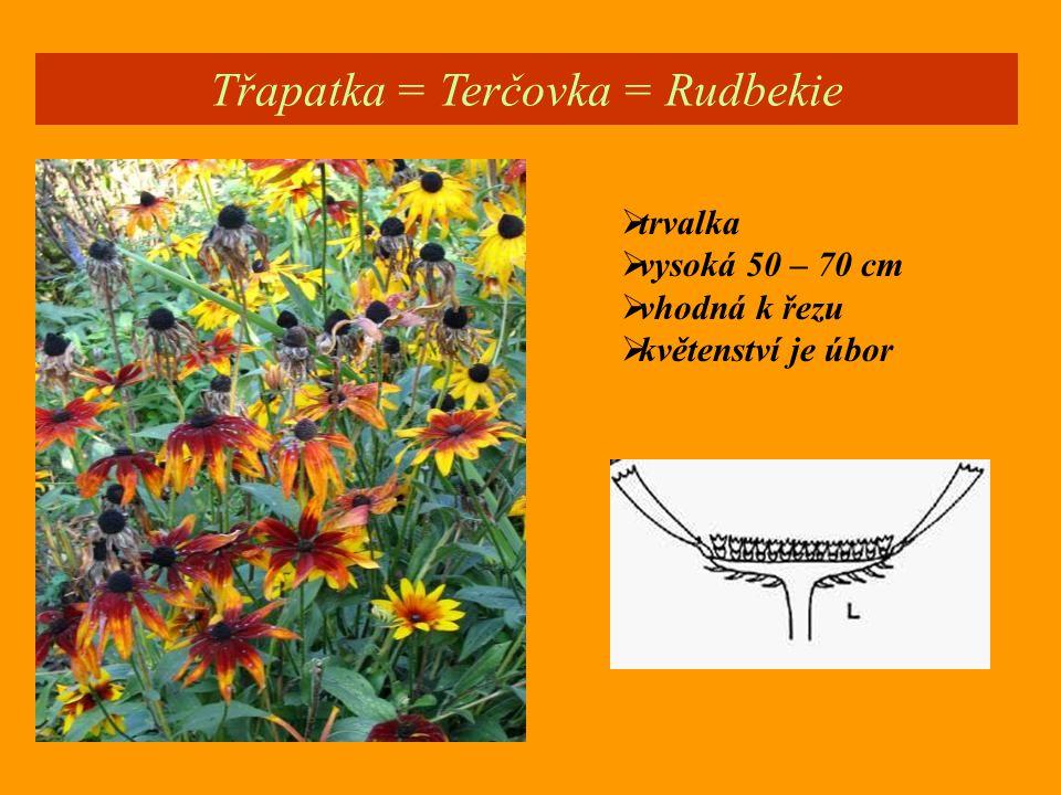 Třapatka = Terčovka = Rudbekie  trvalka  vysoká 50 – 70 cm  vhodná k řezu  květenství je úbor