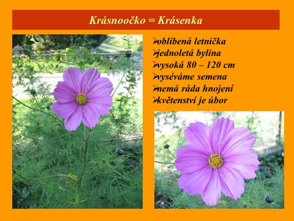 Krásnoočko = Krásenka  oblíbená letnička  jednoletá bylina  vysoká 80 – 120 cm  vyséváme semena  nemá ráda hnojení  květenství je úbor