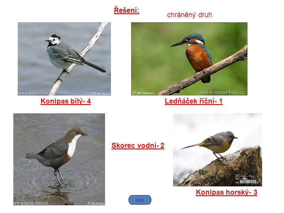 Konipas bílý- 4Ledňáček říční- 1 Skorec vodní- 2 Konipas horský- 3 Řešení: zpět chráněný druh
